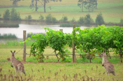 Chinese investors target Australian wines