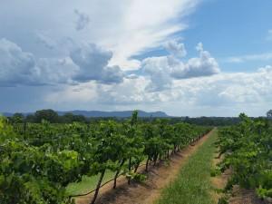 Hunter Valley Vineyard Domaine de Binet - Bespoke Hunter 2015- sml