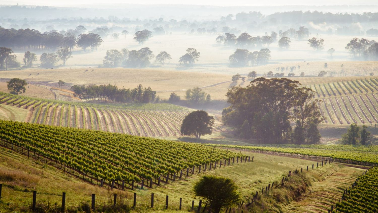More for Less: The Appeal of the Hunter Region