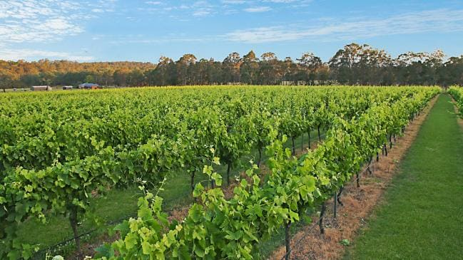 Hunter Valley: Far from the Madding Crowd
