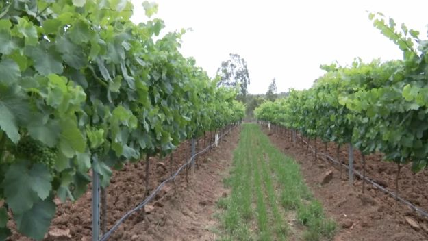 Australian winery investment on the rise